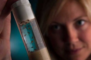 Top 10 Most Resilient Animals - Methuselah Flies