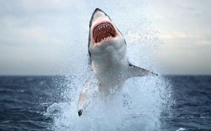Top 10 Most Resilient Animals - Sharks