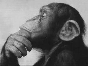 Top 10 Unusual Pets - Monkey