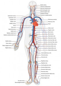 Top 10 Medical Breakthroughs - Circulatory System