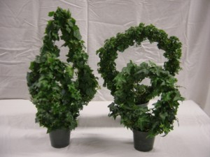 Top 10 Plants To Grow - Angel Ivy Ring Topiary